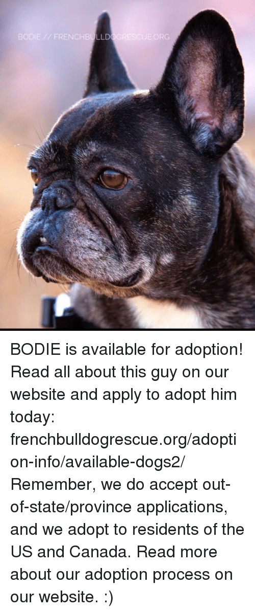 us-and-canada: BODIE // FRENCHB LLD  ③GRESCUE.ORG BODIE is available for adoption! Read all about this guy on our website and apply to adopt him today: frenchbulldogrescue.org/adoption-info/available-dogs2/  Remember, we do accept out-of-state/province applications, and we adopt to residents of the US and Canada. Read more about our adoption process on our website. :)