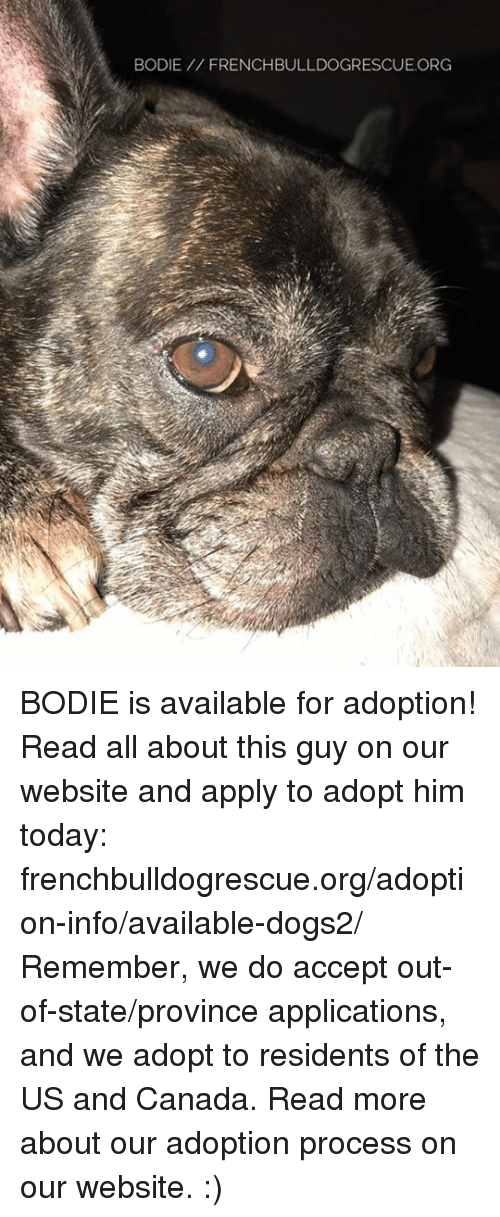 us-and-canada: BODIE FRENCHBULLDOGRESCUE.ORG BODIE is available for adoption! Read all about this guy on our website  and apply to adopt him today: frenchbulldogrescue.org/adoption-info/available-dogs2/  Remember, we do accept out-of-state/province applications, and we adopt to residents of the US and Canada. Read more about our adoption process on our website. :)