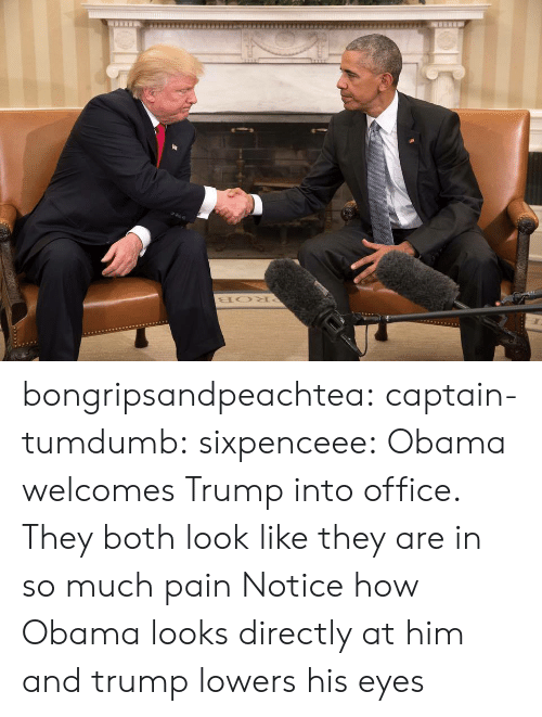 Obama, Tumblr, and Blog: bongripsandpeachtea:  captain-tumdumb:  sixpenceee:  Obama welcomes Trump into office.   They both look like they are in so much pain  Notice how Obama looks directly at him and trump lowers his eyes