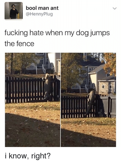 Bool: bool man ant  @Henny Plug  fucking hate when my dog jumps  the fence i know, right?