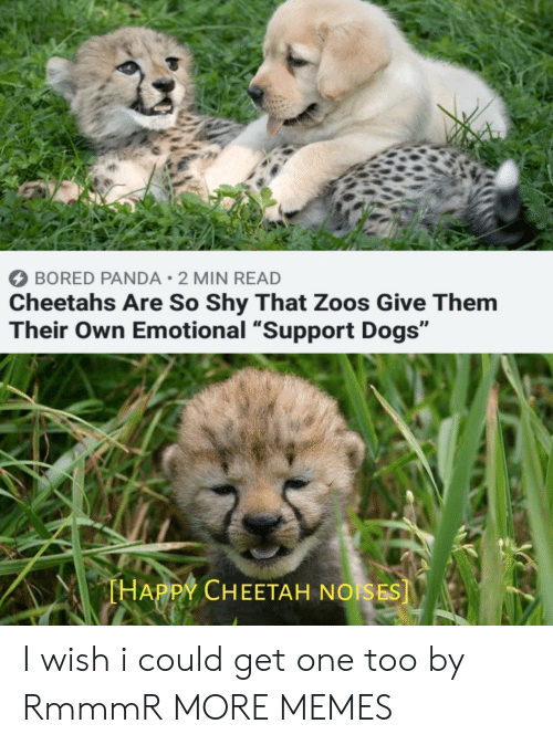 """cheetahs: BORED PANDA 2 MIN READ  Cheetahs Are So Shy That Zoos Give Them  Their Own Emotional """"Support Dogs""""  THAPPY CHEETAH NOISES] I wish i could get one too by RmmmR MORE MEMES"""