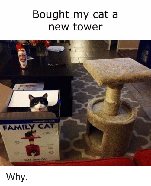 Family, Love, and Memes: Bought my cat a  new tower  STA  FAMILY CAT  Caca Love 1c/ Why.