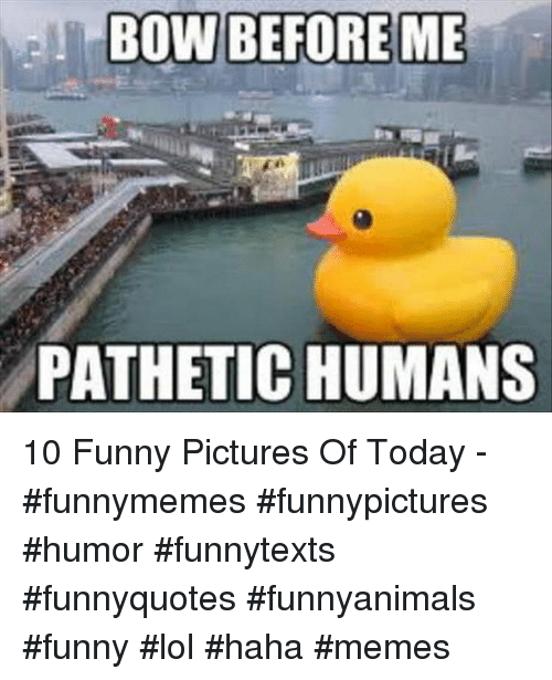 Funny, Lol, and Memes: BOW BEFOREME  PATHETIC HUMANS 10 Funny Pictures Of Today - #funnymemes #funnypictures #humor #funnytexts #funnyquotes #funnyanimals #funny #lol #haha #memes