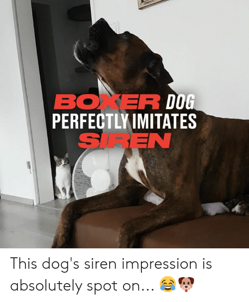 Dank, Dogs, and Boxer: BOXER DOG  PERFECTLY IMITATES  SIREN This dog's siren impression is absolutely spot on... 😂🐶