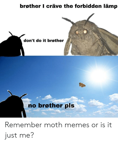 Is It Just Me: brøther I cräve the forbidden lämp  don't do it brøther  no brøther pls Remember moth memes or is it just me?