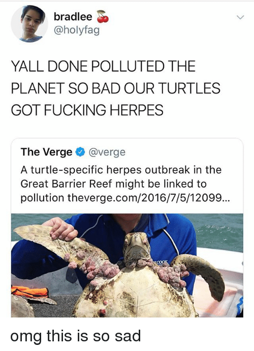 Bad, Fucking, and Herpes: bradlee  @holyfag  YALL DONE POLLUTED THE  PLANET SO BAD OUR TURTLES  GOT FUCKING HERPES  The Verge@verge  A turtle-specific herpes outbreak in the  Great Barrier Reef might be linked to  pollution theverge.com/2016/7/5/12099... omg this is so sad