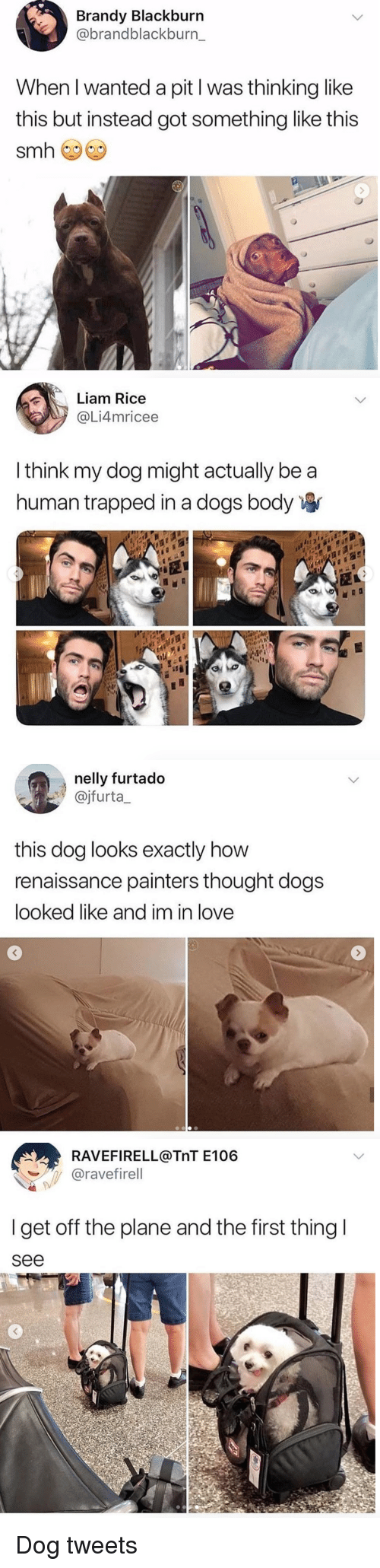 Dogs, Love, and Nelly: Brandy Blackburn  @brandblackburn_  When I wanted a pit l was thinking like  this but instead got something like this   Liam Rice  @Li4mricee  I think my dog might actually be a  human trapped in a dogs body   nelly furtado  ajfurta  this dog looks exactly how  renaissance painters thought dogs  looked like and im in love   RAVEFIRELL@TnT E106  ︶ -,. @ravefirell  I get off the plane and the first thing  see Dog tweets