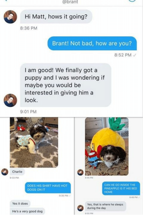 hot dogs: @brant  Hi Matt, hows it going?  8:36 PM  Brant! Not bad, how are you?  8:52 PM  I am good! We finally got a  puppy and I was wondering if  maybe you would be  interested in giving him a  look  9:01 PM  Charlie  0-33 PM  045 PM  DOES HIS SHIRT HAVE HOT  DOGS ON IT  CAN HE GO INSIDE THE  PINEAPPLE IS IT HIS BED  HOME  35 PM  048 PM  Yes it does  Yes, that is where he sieeps  during the day  He's a very good dog  50 PM