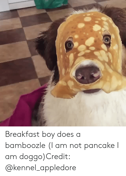 Instagram, Target, and Breakfast: Breakfast boy does a bamboozle (I am not pancake I am doggo)Credit: @kennel_appledore