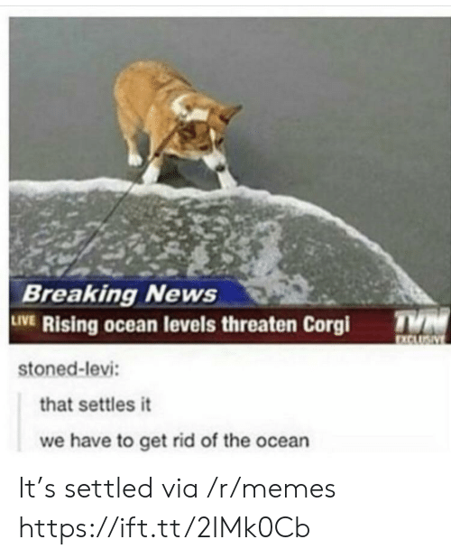 Corgi, Memes, and News: Breaking News  LIVE Rising ocean levels threaten Corgi  stoned-levi  XCLU  hat settles it  we have to get rid of the ocean It's settled via /r/memes https://ift.tt/2IMk0Cb