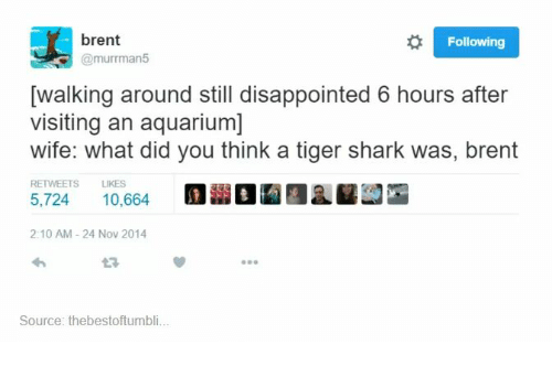 sharking: brent  @murrman5  Following  walking around still disappointed 6 hours after  visiting an aquarium]  wife: what did you think a tiger shark was, brent  RETWEETS LIKES  5,724  10,6641 Mill L ㎜  2:10 AM-24 Nov 2014  23  Source: thebestoftumbli.