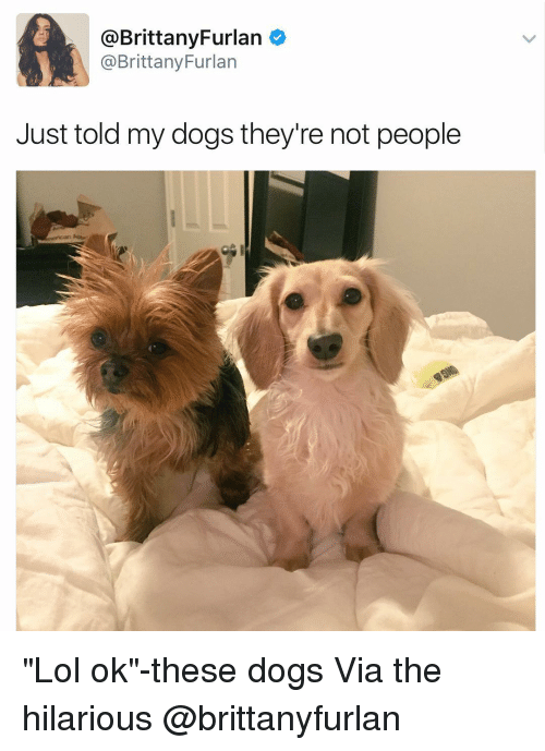 """Brittanie: @Brittany Furlan  @Brittany Furlan  Just told my dogs they're not people """"Lol ok""""-these dogs Via the hilarious @brittanyfurlan"""