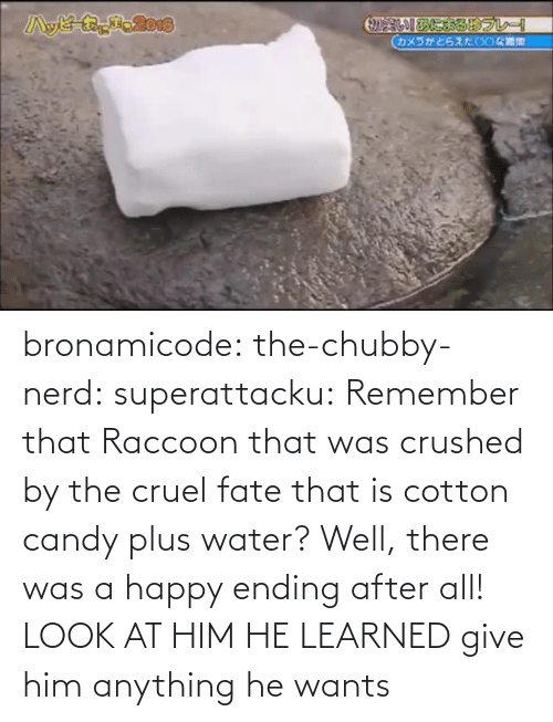 A Happy Ending: bronamicode:  the-chubby-nerd:  superattacku:    Remember that Raccoon that was crushed by the cruel fate that is cotton candy plus water? Well, there was a happy ending after all!     LOOK AT HIM HE LEARNED   give him anything he wants