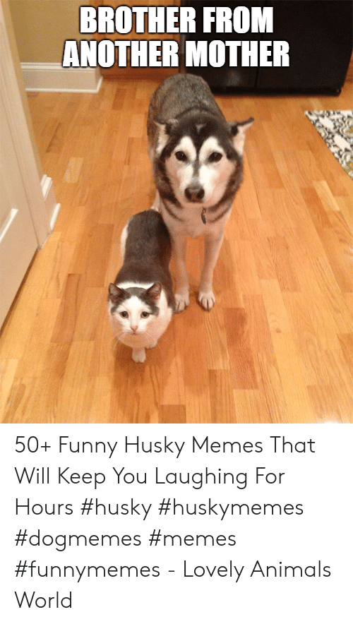 Animals, Funny, and Memes: BROTHER FROM  ANOTHER MOTHER 50+ Funny Husky Memes That Will Keep You Laughing For Hours #husky #huskymemes #dogmemes #memes #funnymemes - Lovely Animals World