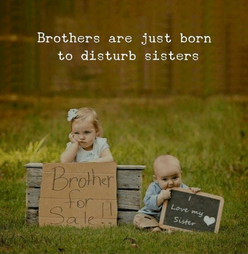 Love, Sisters, and Brother: Brothers are just born  to disturb sisters  Brother  for  Sale  Love my  11  Sister