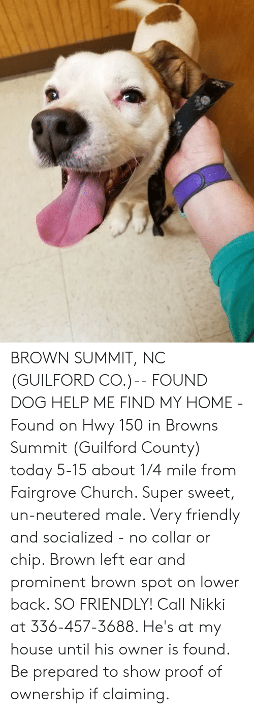 Church, Memes, and My House: BROWN SUMMIT, NC (GUILFORD CO.)-- FOUND DOG  HELP ME FIND MY HOME - Found on Hwy 150 in Browns Summit (Guilford County) today 5-15 about 1/4 mile from Fairgrove Church. Super sweet, un-neutered male. Very friendly and socialized - no collar or chip.   Brown left ear and prominent brown spot on lower back. SO FRIENDLY! Call Nikki at 336-457-3688. He's at my house until his owner is found. Be prepared to show proof of ownership if claiming.