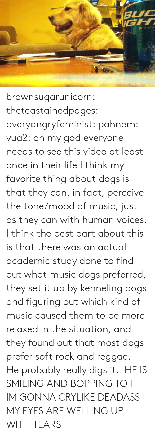 perceive: brownsugarunicorn:  theteastainedpages:  averyangryfeminist:  pahnem:  vua2:  oh my god  everyone needs to see this video at least once in their life  I think my favorite thing about dogs is that they can, in fact, perceive the tone/mood of music, just as they can with human voices.  I think the best part about this is that there was an actual academic study done to find out what music dogs preferred, they set it up by kenneling dogs and figuring out which kind of music caused them to be more relaxed in the situation, and they found out that most dogs prefer soft rock and reggae. He probably really digs it.   HE IS SMILING AND BOPPING TO IT IM GONNA CRYLIKE DEADASS MY EYES ARE WELLING UP WITH TEARS