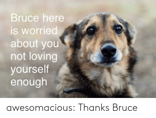 Tumblr, Blog, and Com: Bruce here  is worried  about you  not loving  yourself  enough awesomacious:  Thanks Bruce