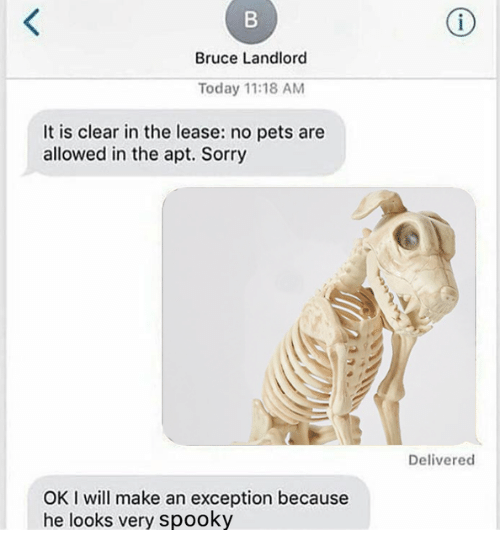 Ok I Will: Bruce Landlord  Today 11:18 AM  It is clear in the lease: no pets are  allowed in the apt. Sorry  Delivered  OK I will make an exception because  he looks very spooky
