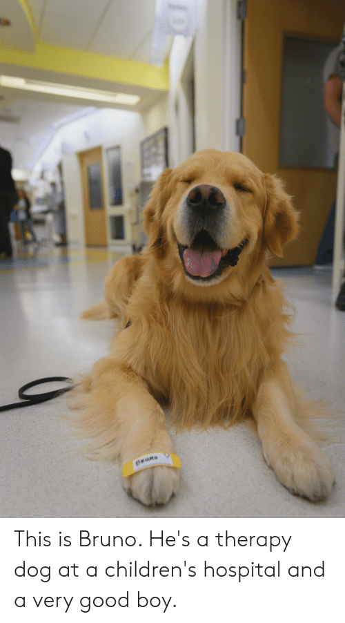 Bruno This Is Bruno He S A Therapy Dog At A Children S