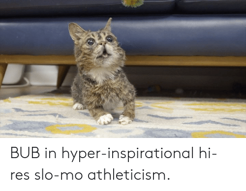 Memes, 🤖, and Bub: BUB in hyper-inspirational hi-res slo-mo athleticism.