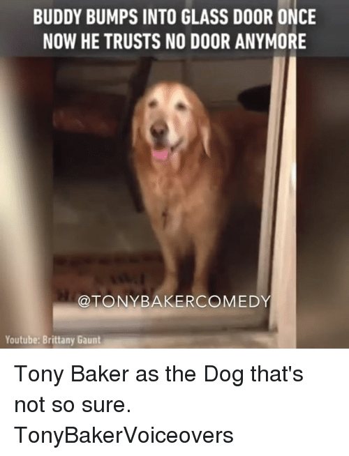 Brittanie: BUDDY BUMPS INTO GLASS DOOR ONCE  NOW HE TRUSTS NO DOOR ANYMORE  @TONY BAKER COMEDY  Youtube: Brittany Gaunt Tony Baker as the Dog that's not so sure. TonyBakerVoiceovers