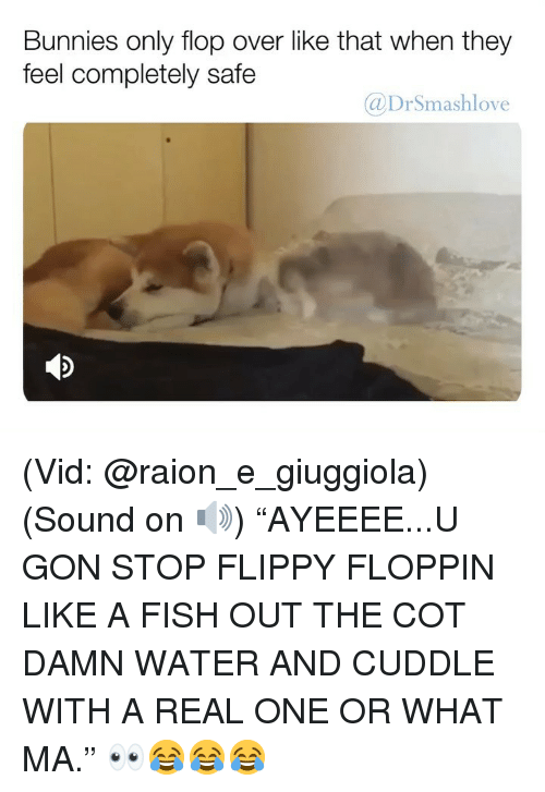 """Bunnies, Memes, and Fish: Bunnies only flop over like that when they  feel completely safe  @DrSmashlove (Vid: @raion_e_giuggiola) (Sound on 🔊) """"AYEEEE...U GON STOP FLIPPY FLOPPIN LIKE A FISH OUT THE COT DAMN WATER AND CUDDLE WITH A REAL ONE OR WHAT MA."""" 👀😂😂😂"""