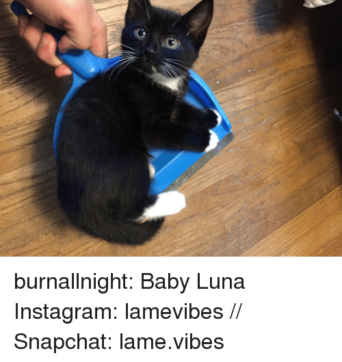luna: burnallnight:  Baby Luna  Instagram: lamevibes // Snapchat: lame.vibes