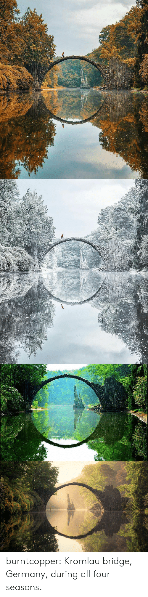 Tumblr, Blog, and Germany: burntcopper: Kromlau bridge, Germany, during all four seasons.