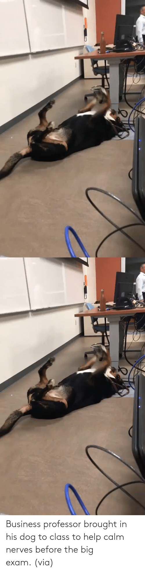 His: Business professor brought in his dog to class to help calm nerves before the big exam. (via)