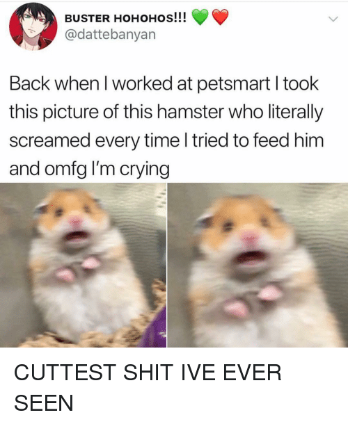 Petsmart: BUSTER HOHOHOs!!!  @dattebanyan  Back when I worked at petsmart I took  this picture of this hamster who literally  screamed every time l tried to feed him  and omfg I'm crying CUTTEST SHIT IVE EVER SEEN