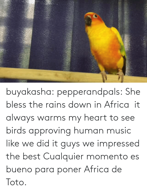 para: buyakasha:  pepperandpals: ‪She bless the rains down in Africa ‬ it always warms my heart to see birds approving human music like we did it guys we impressed the best  Cualquier momento es bueno para poner Africa de Toto.