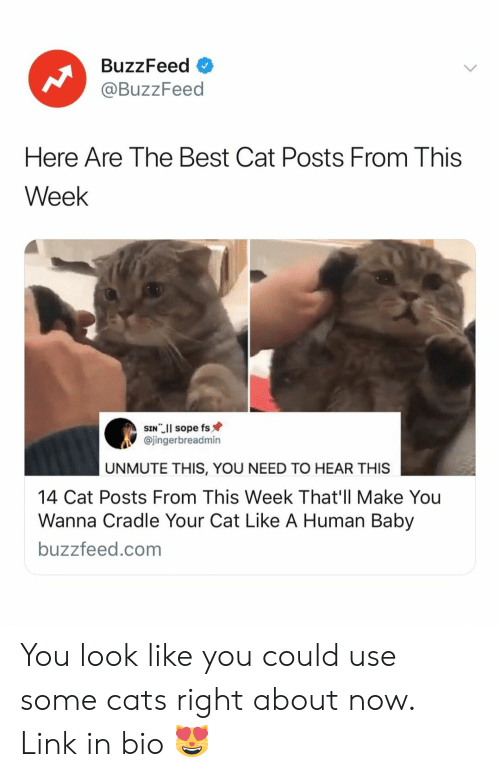 human baby: BuzzFeed  @BuzzFeed  Here Are The Best Cat Posts From This  Week  @jingerbreadmin  UNMUTE THIS, YOU NEED TO HEAR THIS  14 Cat Posts From This Week That'll Make You  Wanna Cradle Your Cat Like A Human Baby  buzzfeed.com You look like you could use some cats right about now. Link in bio 😻