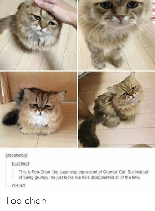 Disappointed, Grumpy Cat, and Time: buzzteed  This is Foo-Chan, the Japanese equivalent of Grumpy Cat But instead  of being grumpy, he just looks like he's disappointed all of the time  OH NO Foo chan
