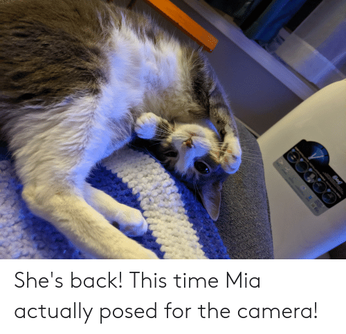 Camera, Time, and Back: C She's back! This time Mia actually posed for the camera!