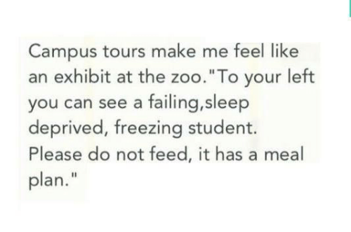 "Exhibit: Campus tours make me feel like  an exhibit at the zoo.""To your left  you can see a failing,sleep  deprived, freezing student.  Please do not feed, it has a meal  plan."""
