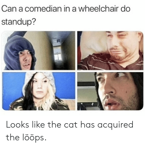 loops: Can a comedian in a wheelchair do  standup? Looks like the cat has acquired the lööps.