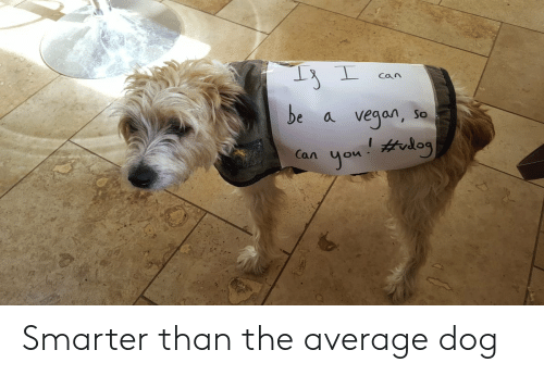 Vegan, Dog, and Can: Can  be  vegan,  So  a  you trlog  Can Smarter than the average dog
