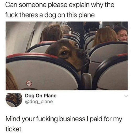 Business, Mind, and Dog: Can someone please explain why the  fuck theres a dog on this plane  Dog On Plane  @dog_plane  Mind your fucking business I paid for my  ticket