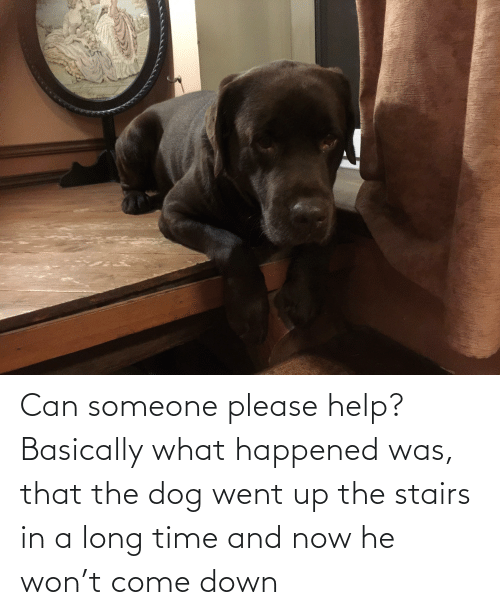 come: Can someone please help? Basically what happened was, that the dog went up the stairs in a long time and now he won't come down