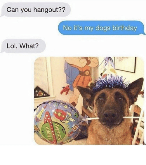 Lol What: Can you hangout??  No it's my dogs birthday  Lol. What? So cute - might delete later