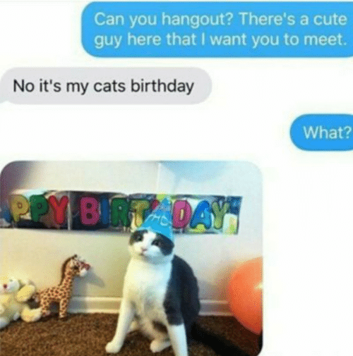 i want you: Can you hangout? There's a cute  guy here that I want you to meet.  No it's my cats birthday  What?  PPY BRTADAY