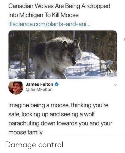 Michigan: Canadian Wolves Are Being Airdropped  Into Michigan To Kill Moose  iflscience.com/plants-and-ani...  James Felton  @JimMFelton  Imagine being a moose, thinking you're  safe, looking up and seeing a wolf  parachuting down towards you and your  moose family Damage control