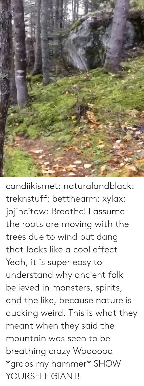 the mountain: candiikismet: naturalandblack:   treknstuff:  betthearm:  xylax:  jojincitow: Breathe! I assume the roots are moving with the trees due to wind but dang that looks like a cool effect   Yeah, it is super easy to understand why ancient folk believed in monsters, spirits, and the like, because nature is ducking weird.  This is what they meant when they said the mountain was seen to be breathing  crazy   Woooooo   *grabs my hammer* SHOW YOURSELF GIANT!