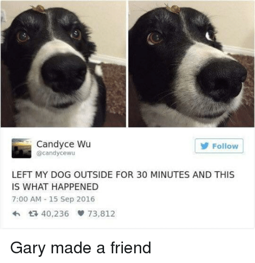 Dog, Friend, and Sep: Candyce Wu  @candycewu  Follow  LEFT MY DOG OUTSIDE FOR 30 MINUTES AND THIS  IS WHAT HAPPENED  7:00 AM - 15 Sep 2016  40,236閘73,812 Gary made a friend