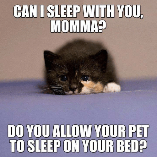 Memes, Sleep, and 🤖: CANI SLEEP WITH YOU  MOMMA?  DO YOU ALLOW YOUR PET  TO SLEEP ON YOUR BED?
