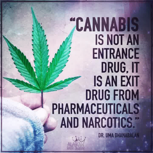 Cannabis: CANNABIS  IS NOT AN  ENTRANCE  DRUG, IT  IS AN EXIT  DRUG FROM  PHARMACEUTICALS  AND NARCOTICS  DR. UMA DHANABALAN