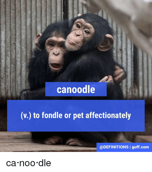 Definitely, Memes, And Definition: Canoodle (v.) To Fondle Or Pet