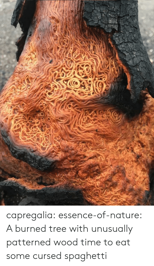 Tumblr, Blog, and Nature: capregalia:  essence-of-nature:   A burned tree with unusually patterned wood    time to eat some cursed spaghetti