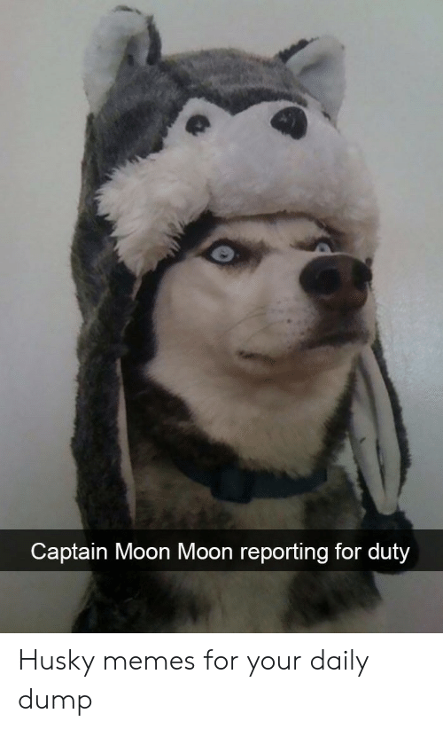 moon moon: Captain Moon Moon reporting for duty Husky memes for your daily dump